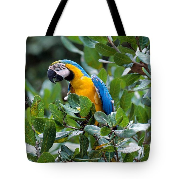 Blue And Yellow Macaw Tote Bag by Art Wolfe