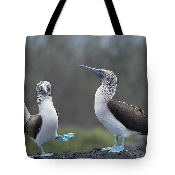 Blue-footed Booby Courtship Dance Tote Bag by Tui De Roy