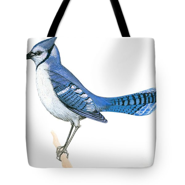 Blue Jay  Tote Bag by Anonymous