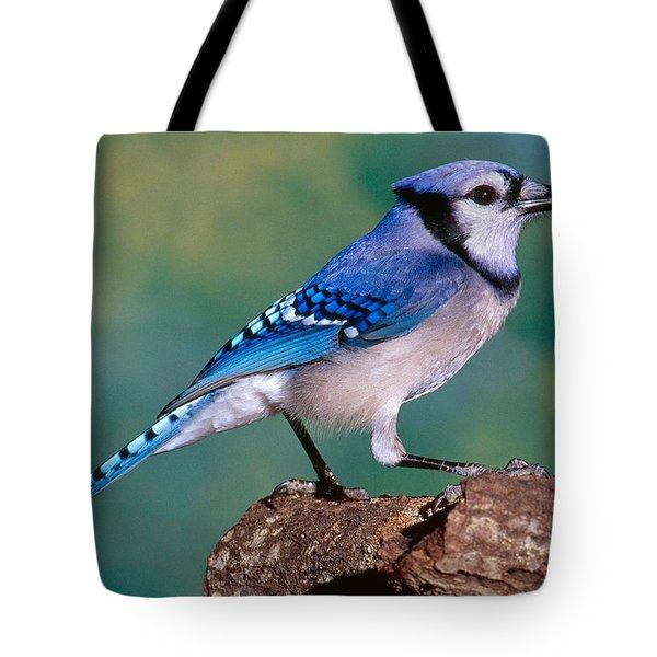 Blue Jay Tote Bag by Millard H. Sharp