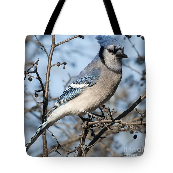 Blue Jay.. Tote Bag by Nina Stavlund