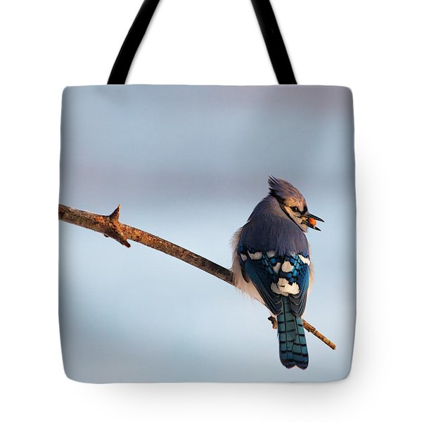 Blue Jay With Nuts Tote Bag by Everet Regal