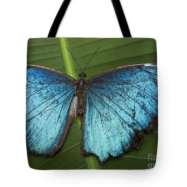 Blue Morpho - Morpho Peleides Tote Bag by Heiko Koehrer-Wagner