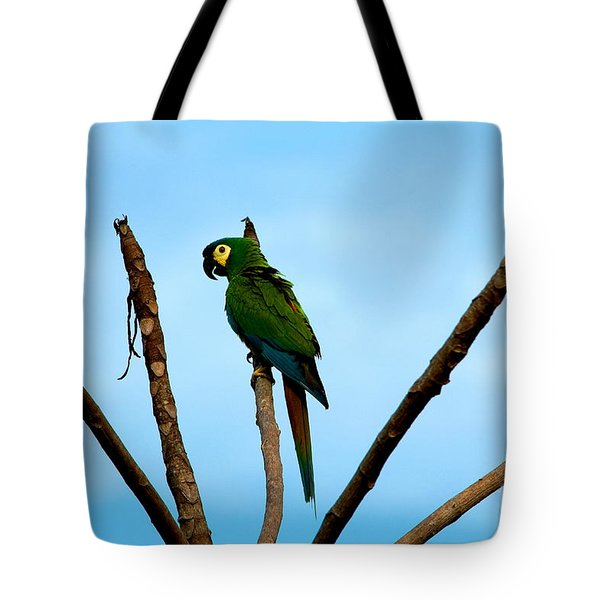 Blue-winged Macaw, Brazil Tote Bag by Gregory G. Dimijian, M.D.