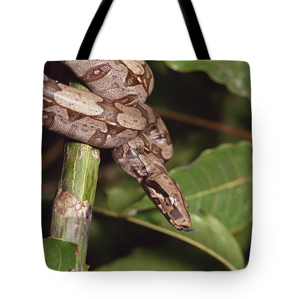 Boa Constrictor Coiled South America Tote Bag by Gerry Ellis