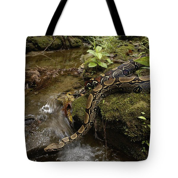 Boa Constrictor Crossing Stream Tote Bag by Pete Oxford