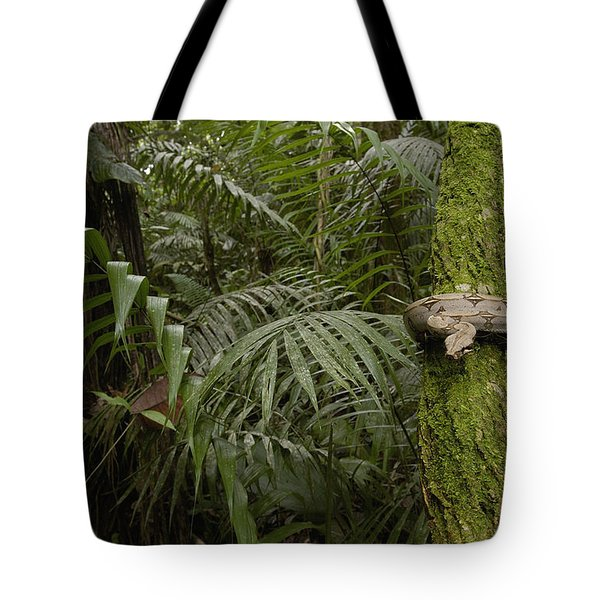 Boa Constrictor In The Rainforest Tote Bag by Pete Oxford