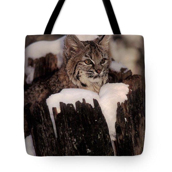 Bobcat Kitten Tote Bag by Ron Sanford