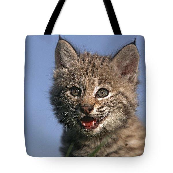 Bobcat Kitten Tote Bag by Tim Fitzharris