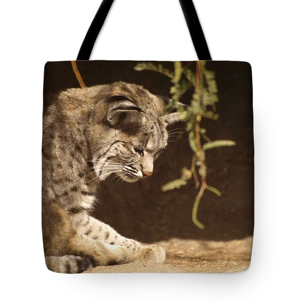 Bobcat Tote Bag by James Peterson