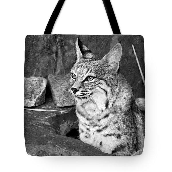 Bobcat Tote Bag by Nikolyn McDonald