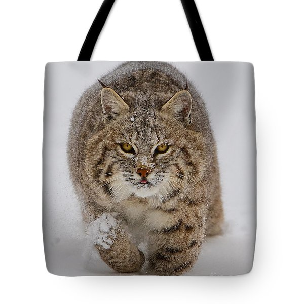 Bobcat Running Forward Tote Bag by Jerry Fornarotto