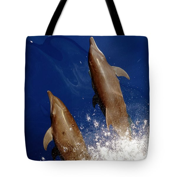 Bottlenose Dolphins Tursiops Truncatus Tote Bag by Anonymous