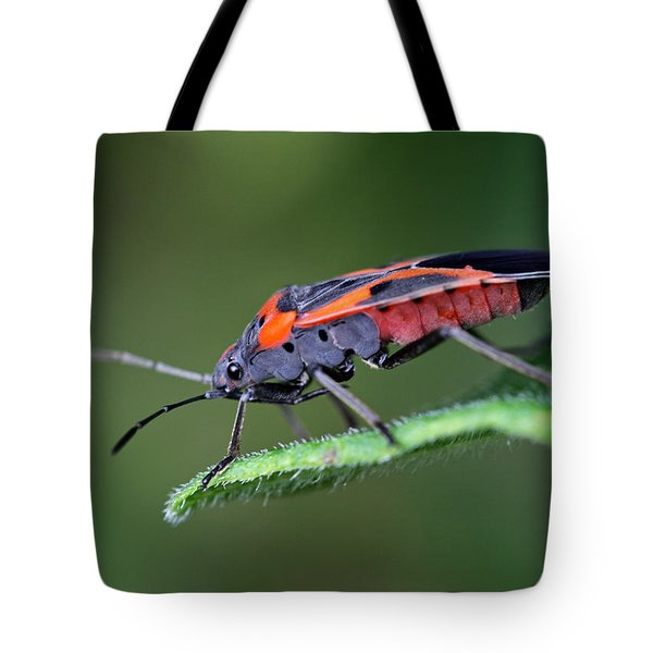 Boxelder Bug Tote Bag by Juergen Roth