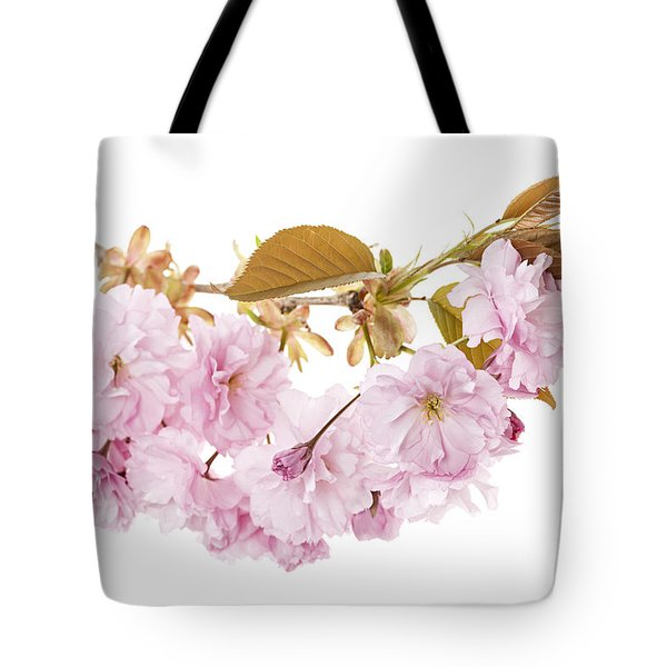 Branch with cherry blossoms Tote Bag by Elena Elisseeva