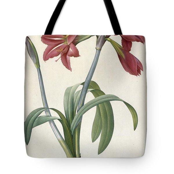 Brazilian Amaryllis Tote Bag by Pierre Joseph Redoute