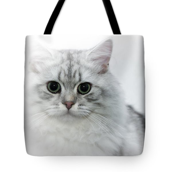 British Longhair Cat Time Goes By Tote Bag by Melanie Viola