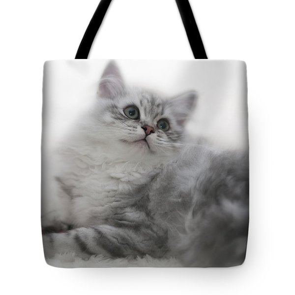British Longhair Kitten Tote Bag by Melanie Viola