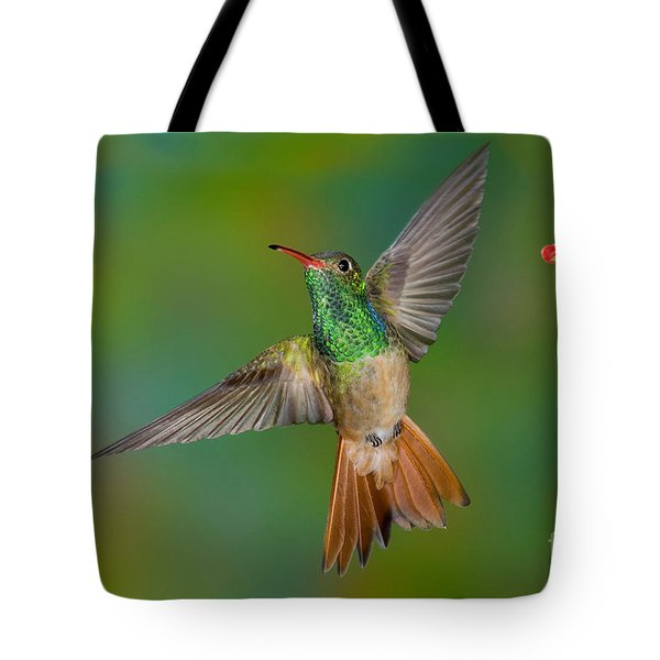 Buff-bellied Hummingbird Tote Bag by Anthony Mercieca
