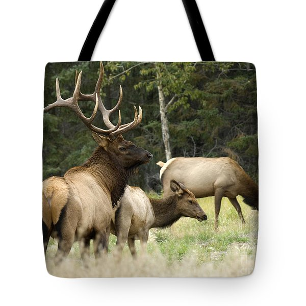 Bull Elk With His Harem Tote Bag by Bob Christopher