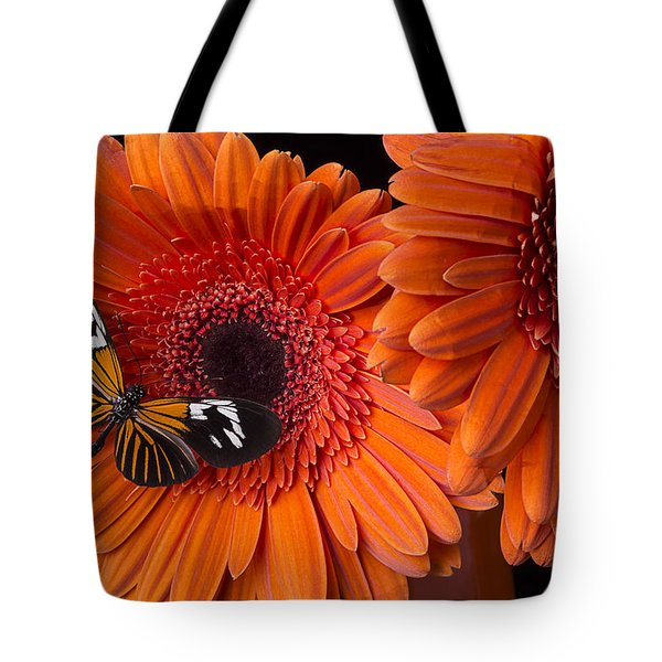 Butterfly on orange mums Tote Bag by Garry Gay