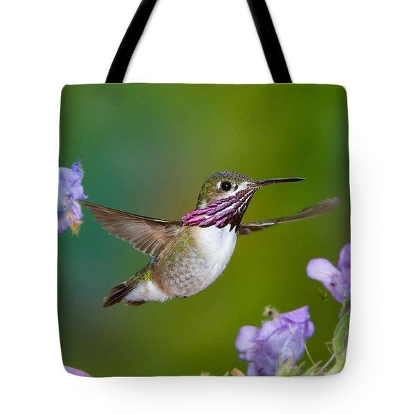 Calliope Hummingbird Tote Bag by Anthony Mercieca