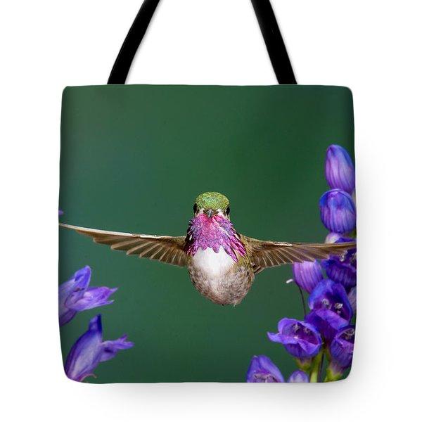 Calliope Hummingbird Stellula Calliope Tote Bag by Anthony Mercieca