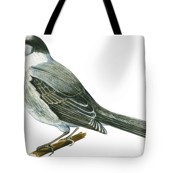 Canada Jay Tote Bag by Anonymous