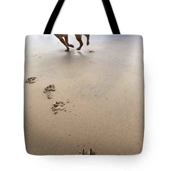 Canine Beach Jogging Tote Bag by Eldad Carin