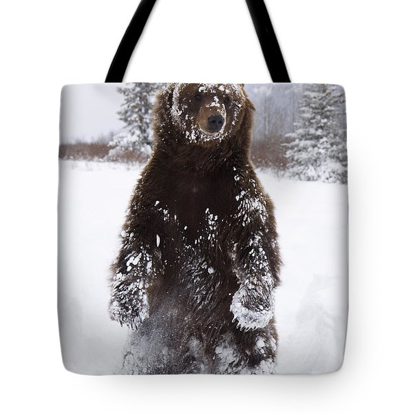 Captive Grizzly Stands On Hind Feet Tote Bag by Doug Lindstrand