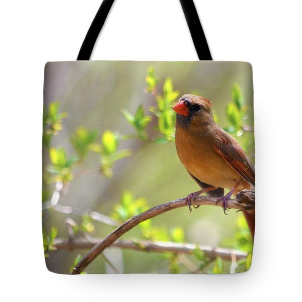 Cardinal In Spring Tote Bag by Sandi OReilly
