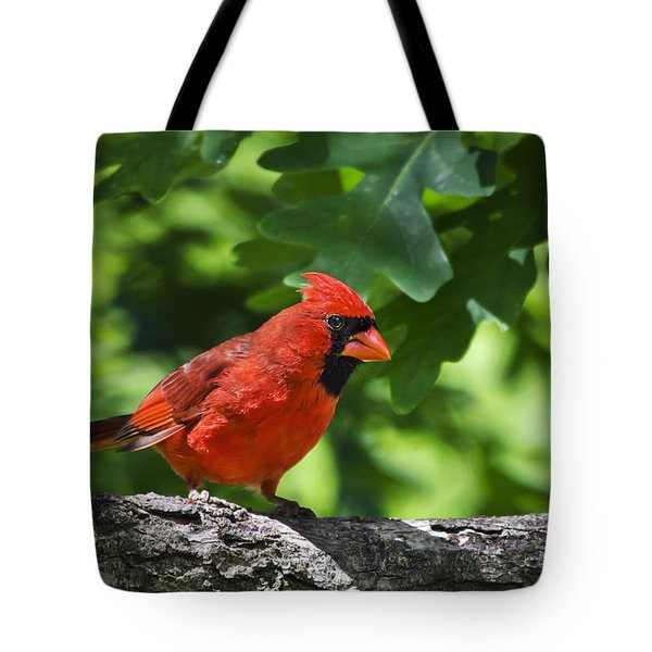 Cardinal Red Tote Bag by Christina Rollo
