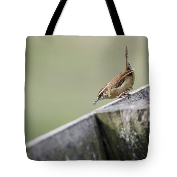 Carolina Wren Two Tote Bag by Heather Applegate