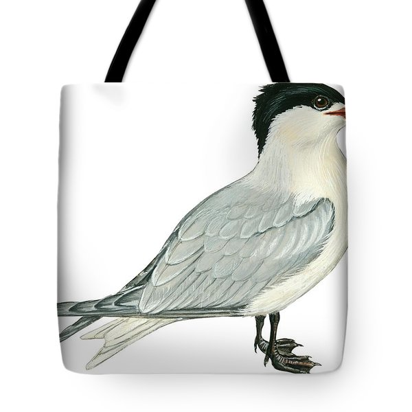 Caspian Tern Tote Bag by Anonymous