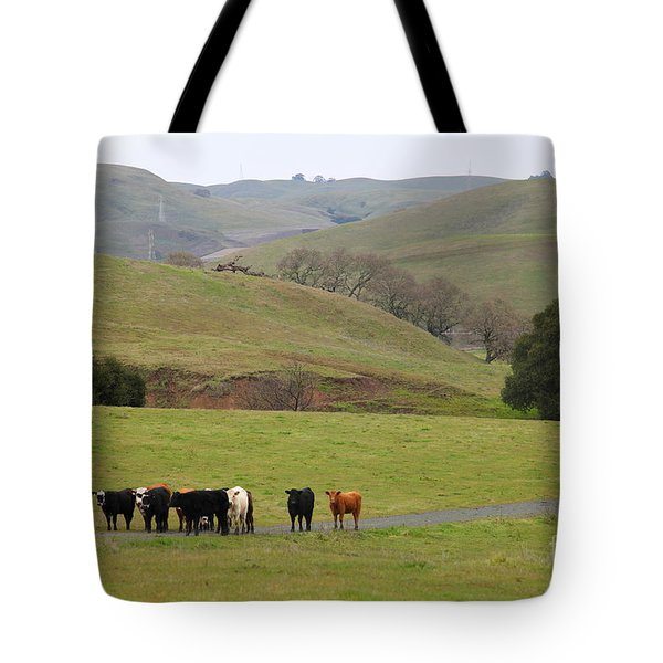 Cattles at Fernandez Ranch California - 5D21062 Tote Bag by Wingsdomain Art and Photography