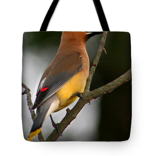 Cedar Wax Wing II Tote Bag by Roger Becker