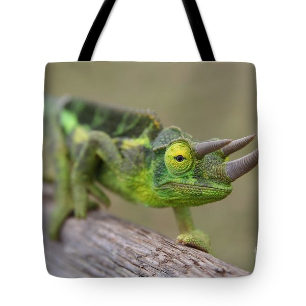 Chamaeleo Jacksonii Ulupalakua Maui Hawaii Tote Bag by Sharon Mau