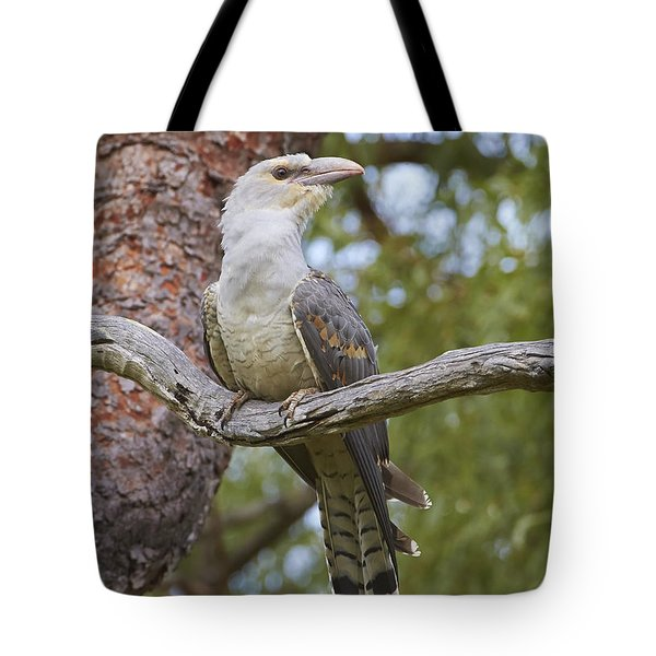 Channel-billed Cuckoo Fledgling Tote Bag by Martin Willis