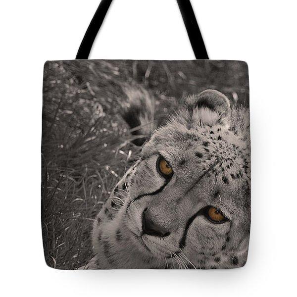 Cheetah Eyes Tote Bag by Martin Newman