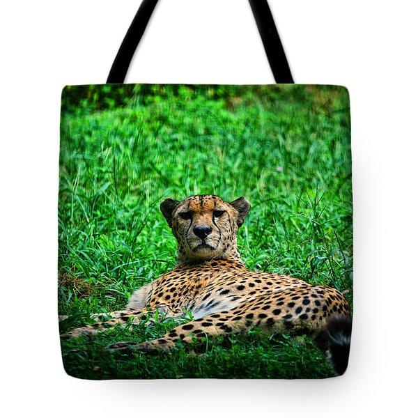 Cheetah Tote Bag by Karol Livote