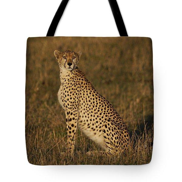 Cheetah On Savanna Masai Mara Kenya Tote Bag by Hiroya Minakuchi
