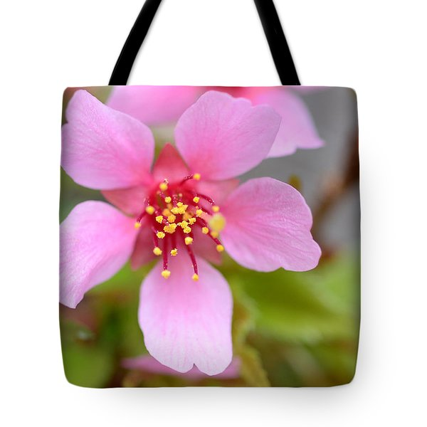 Cherry Blossom Tote Bag by Lisa  Phillips