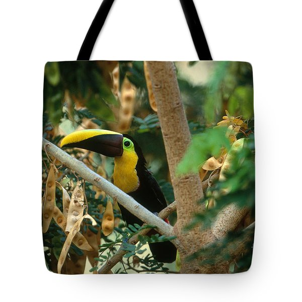 Chestnut-mandibled Toucan Tote Bag by Art Wolfe
