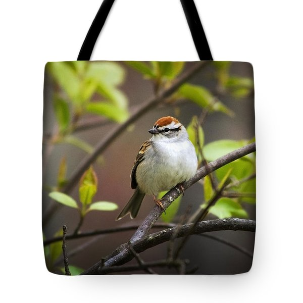 Chipping Sparrow Tote Bag by Christina Rollo