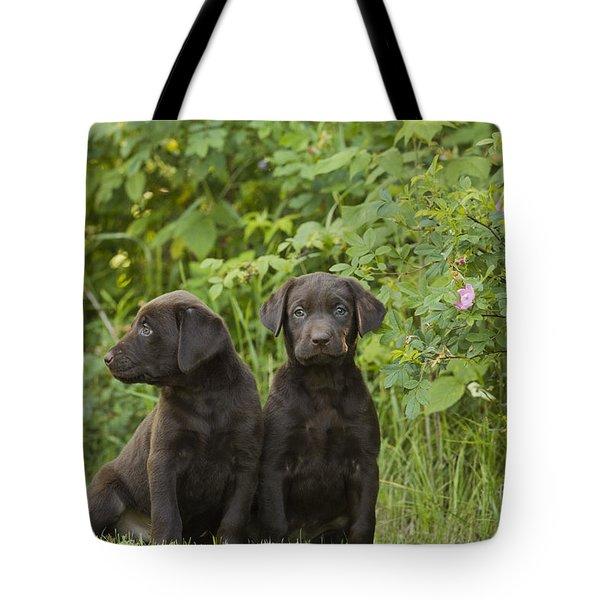 Chocolate Labrador Retriever Puppies Tote Bag by Linda Freshwaters Arndt