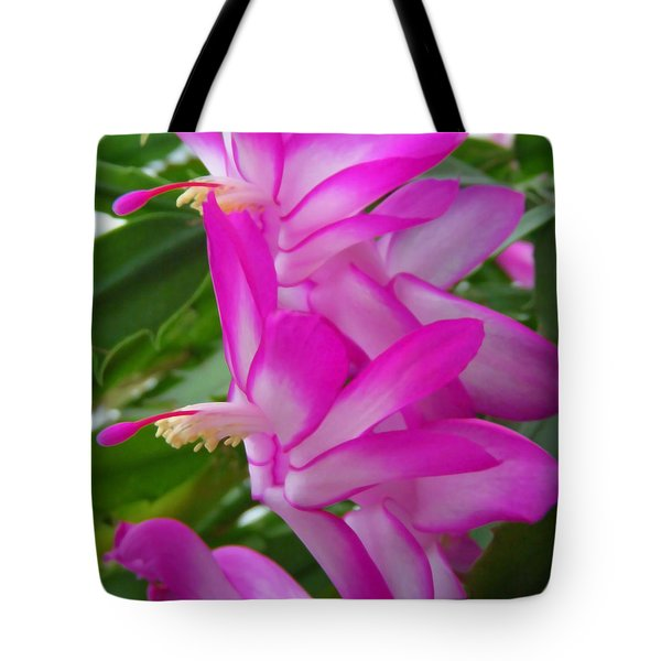 Christmas Cactus Flower Tote Bag by Aimee L Maher Photography and Art Visit ALMGallerydotcom
