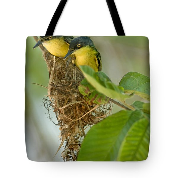 Close-up Of Two Common Tody-flycatchers Tote Bag by Panoramic Images