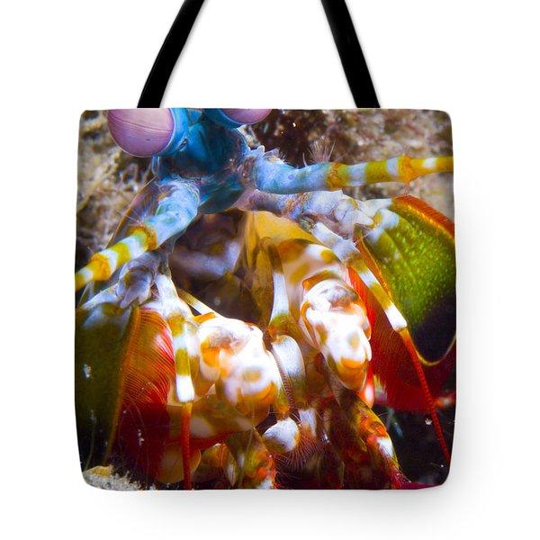 Close-up View Of A Mantis Shrimp Tote Bag by Steve Jones