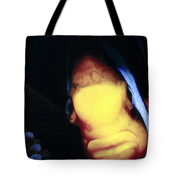 Clownfish 8 Tote Bag by Dawn Eshelman