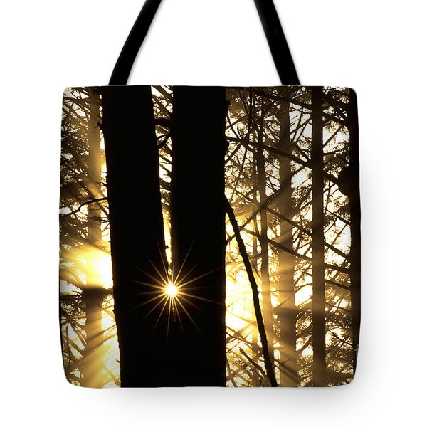 Coastal Forest Tote Bag by Art Wolfe